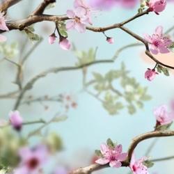 Heerlijk Voorjaar