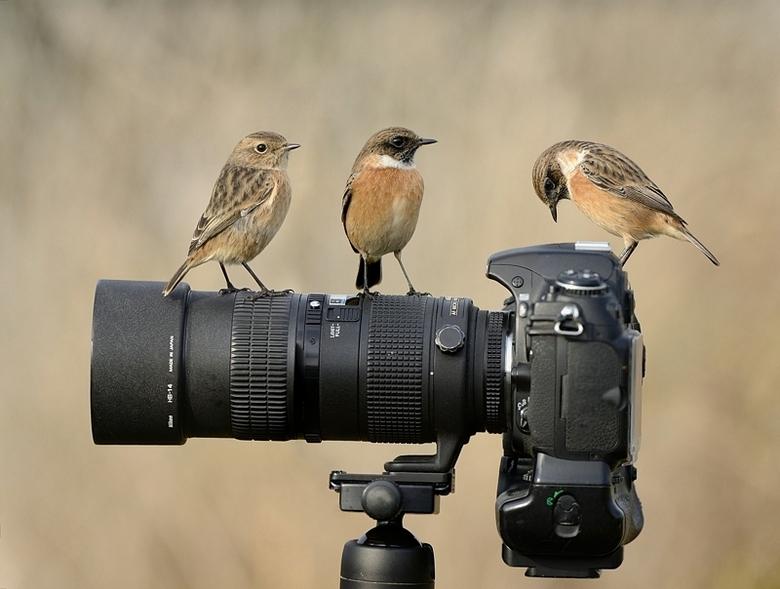 De leraar met zijn leerlingen - klein klasje krijgt fotografieonderwijs.<br /> <br /> Beeld opgebouwd uit drie verschillende foto&#039;s<br /> <br