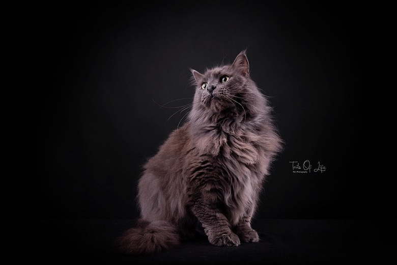 Kitty Cat -
