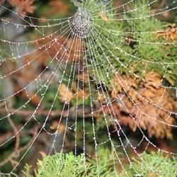 Spinnenwebben (11)