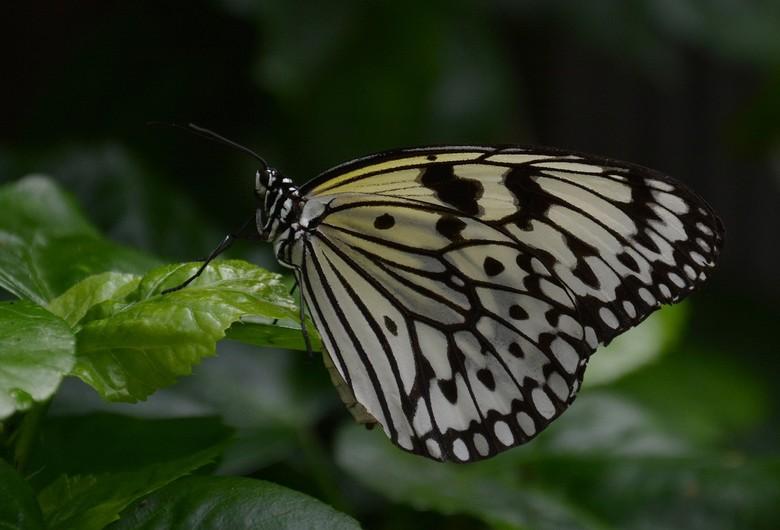 Vlinders in Emmen. - Vlindertuin Emmen.