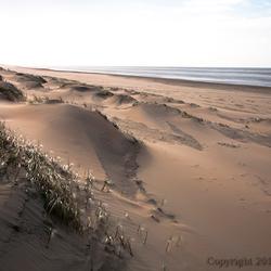 Duinen Noordwijk aan Zee