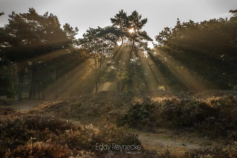 Sunbeams - Prachtige zonnestralen door de bomen tijdens een mistige morgen op de Gasterse Duinen.