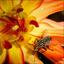 bloem met beest .......................