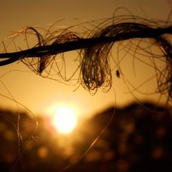 paardenharen in zonsondergang