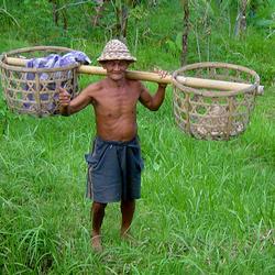 Balinese veldwerker