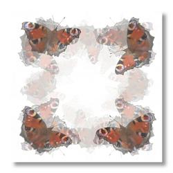 Vlinders anders