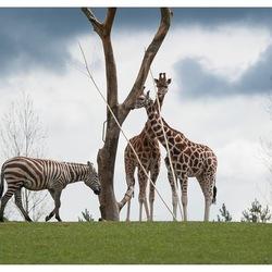 Op safari in Denemarken!