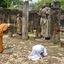 Eerbied voor Boeddha Sri Lanka