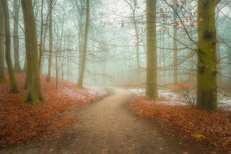 Misty road - Bospad in de mist..
