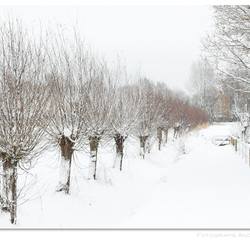 winterwit 2