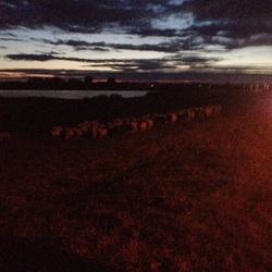 De schapen bij nacht