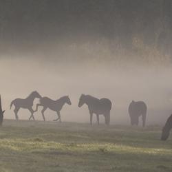 Paardenfamilie in de mist