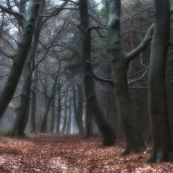 Spooky road