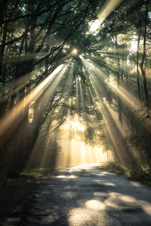 A Star in The Forrest - Wat was het magistraal vanmorgen, in het bos...