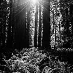 Redwood National Park USA