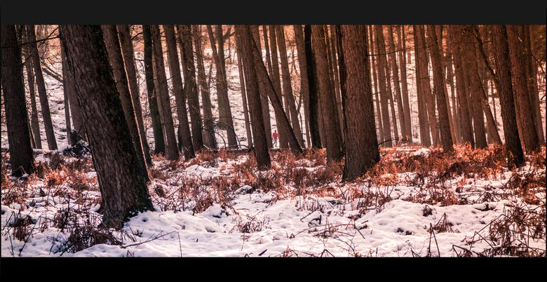 """Alleen in het bos - Rozendaal - Gebruik gemaakt van de Lightroom presets """"wintergloed"""" van zoom.nl"""