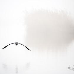 blauwe reiger in de mist