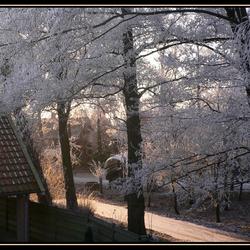 Zon op vroege wintermorgen
