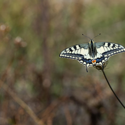 Gespreide vleugels