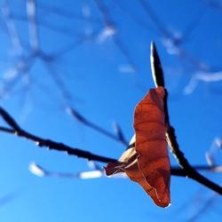 laatste herfstblad