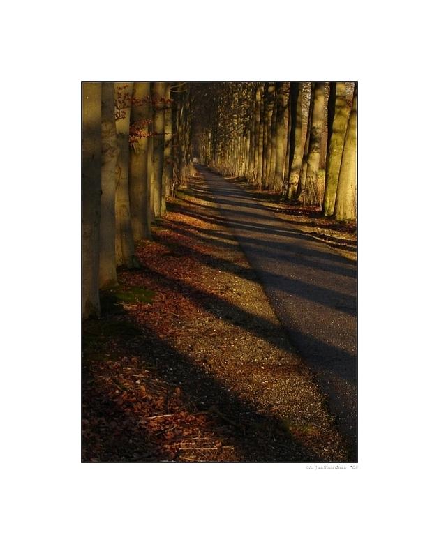 A Long Walk - Een opname van een lange laan op het landgoed IJsselvliedt bij Wezep. <br /> Je doet er zo&#039;n 7 minuten over om deze laan uit te lo