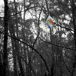 mastbos nieuwjaarsdag 2011