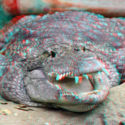 Crocodile Blijdorp Zoo Rotterdam 3D