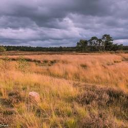Natuurgebied de Nieuwe Heide 1