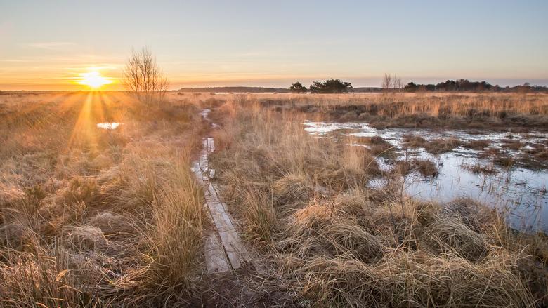Fochteloërveen - Vanmorgen een heerlijke maar koude ochtend gehad in het Fochteloërveen. Een uur voor zonsopkomst ter plekke, gelukkig goed ingepakt (