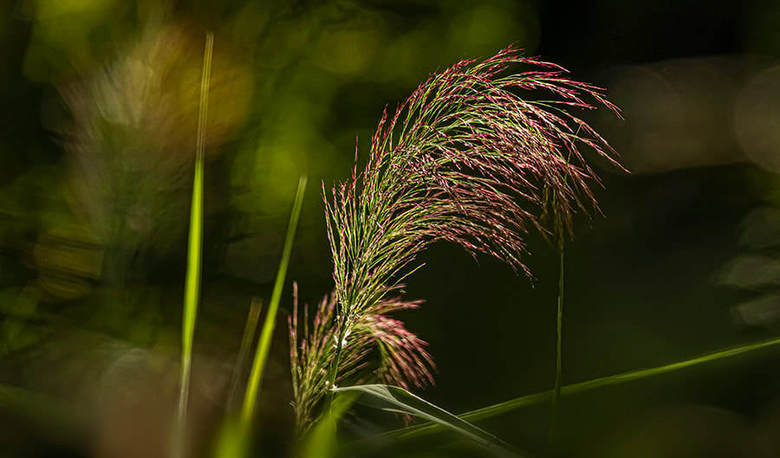 quite some grass  - Mooi Limbabwe <br /> .<br /> canon 7d mark II<br /> Sigma 150 - 600 mm lens