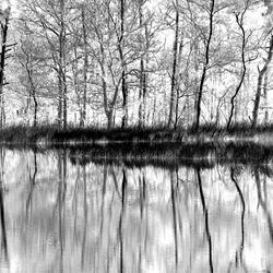 Bos bij Hoogstrate