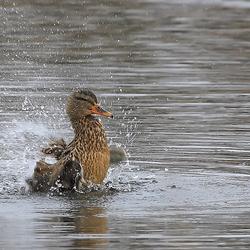Brrr... koud water!!!