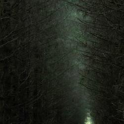 Het heksenbos, nu zonder de lichtval