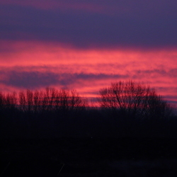 ochtend rood