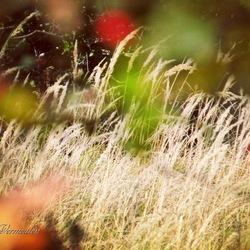 Herfstkleuren en gras