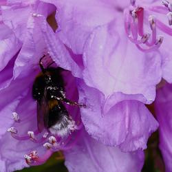 lekker tussen de nectar