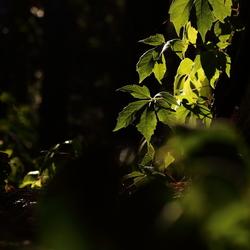 Avond in het bos