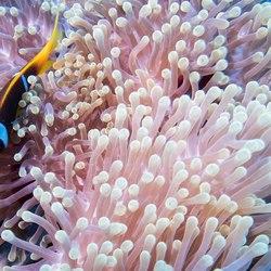 Nemo city