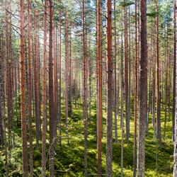 Eindeloze bossen