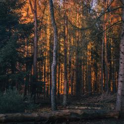 herfst-  Gouden gloed