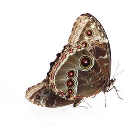 Een parend paar vlinders.jpg