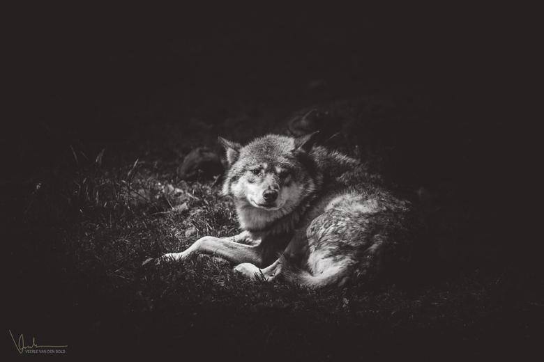 Lone Wolf -