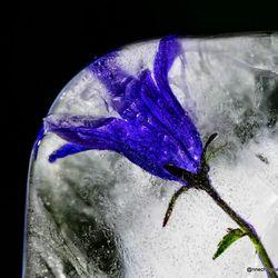 blauw van de kou