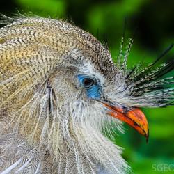 Bijzondere vogel
