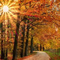 zonnestralen door herfstbladeren