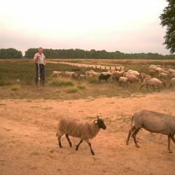 Herder waakt over de kudde