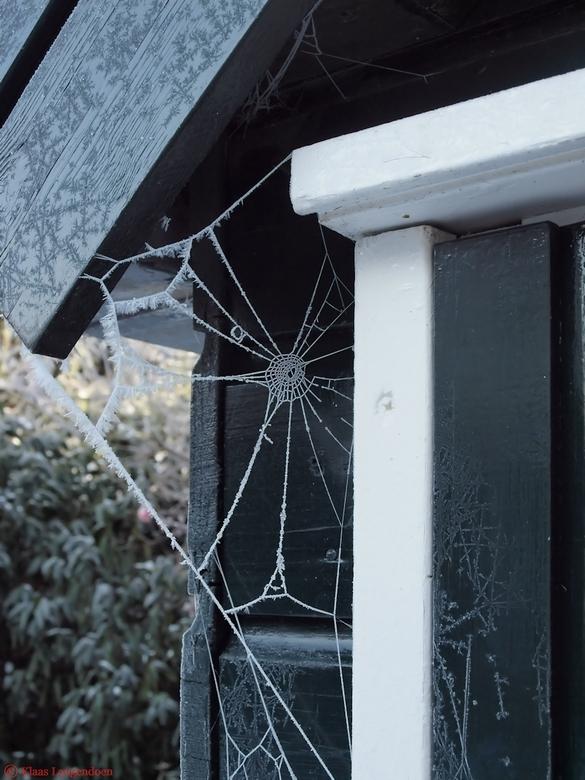 Frosty Spinnenweb - Na een ochtendje mist deze spinnenweb met rijp tegen onze schuur