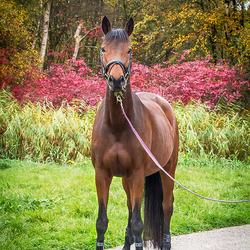 Paard in herfstkleuren