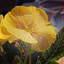 Primula-Foto en Paint Dick A.Otten-DAO Fotoarchief